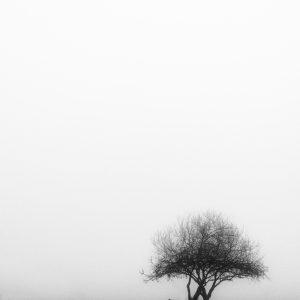 foggie morning