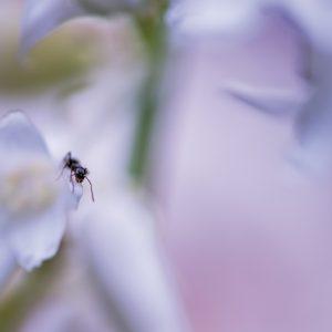ant-art