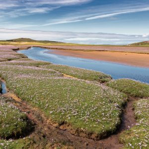 Scottish_Highlands_birdingtour-3